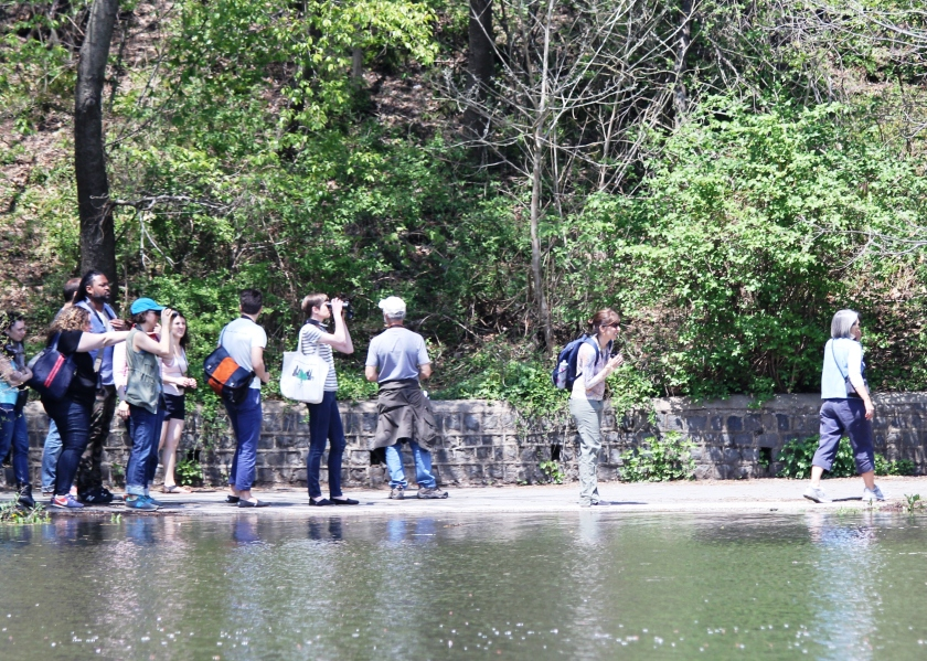 Go over there, these cool Brooklyn birders are probably looking at something cool.