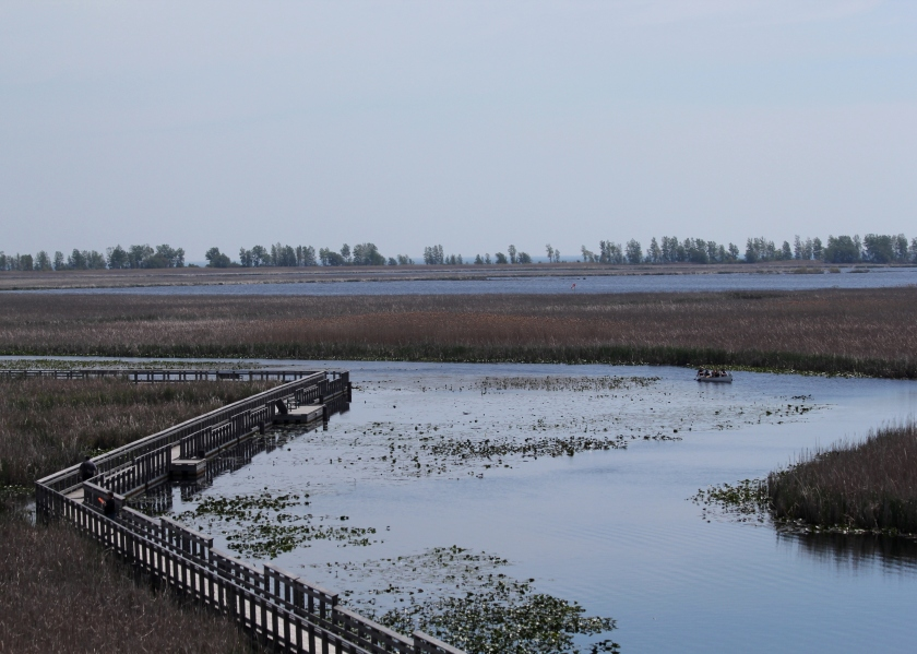 Marsh Boardwalk trail at Pt. Pelee