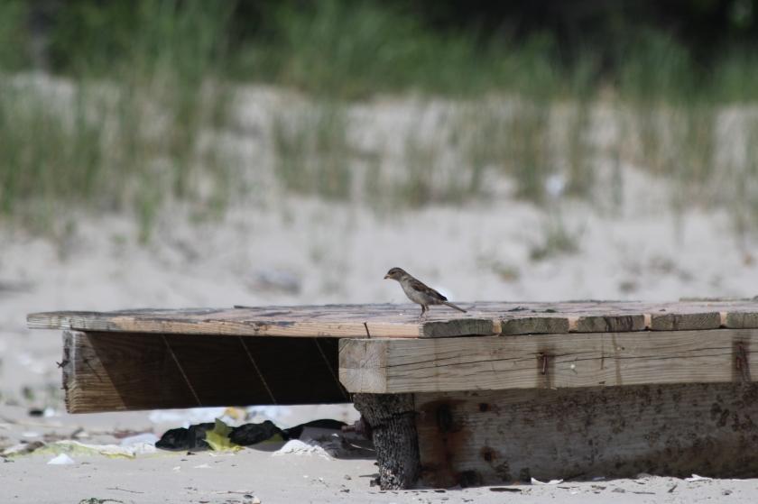 Beach House Sparrow