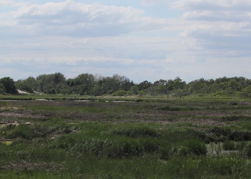 Marsh at Plumb Beach