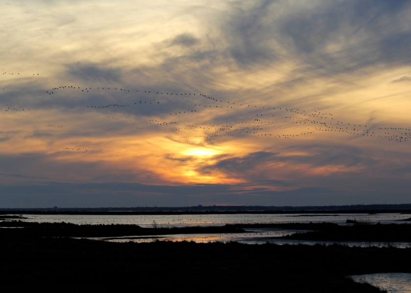 Sunset over Brigantine, silhouetting hundreds of Snow Geese