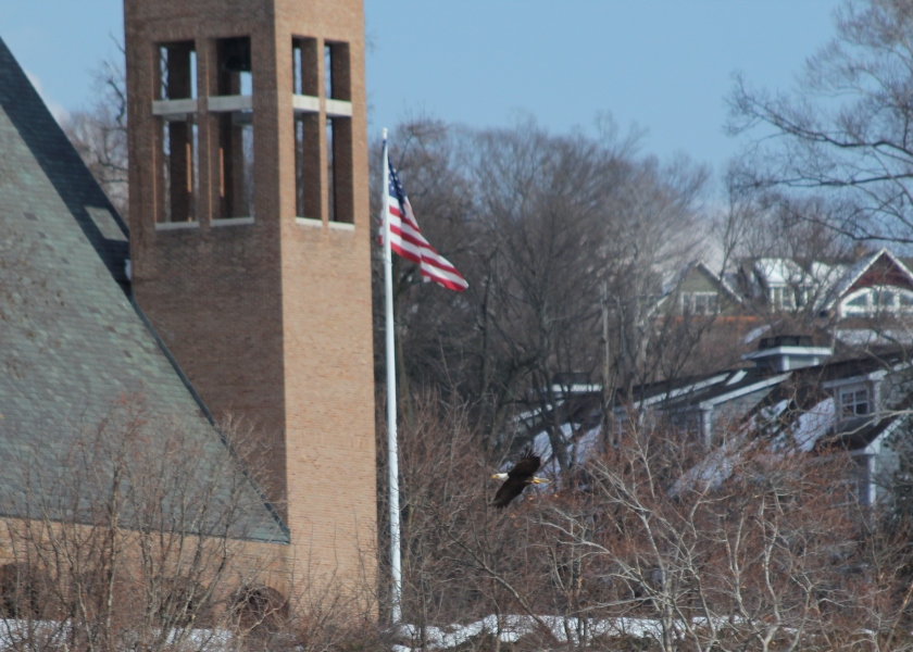 A Bald Eagle with an American flag and a church in the suburbs - the most American photo we've ever taken,