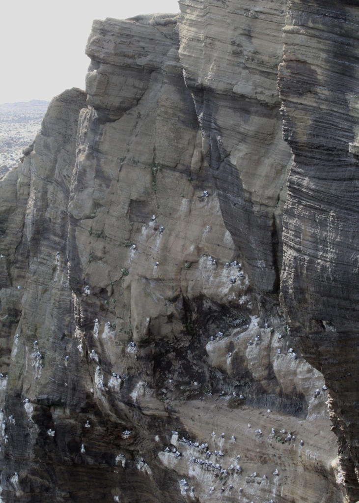 The bird cliffs at Þúfubjarg